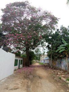 Palomino Colombie